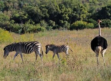 Moreleta Kloof Nature Reserve in Pretoria