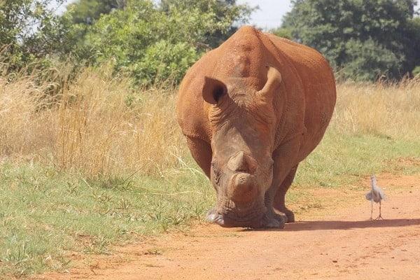 Rietvlei Nature Reserve in Pretoria