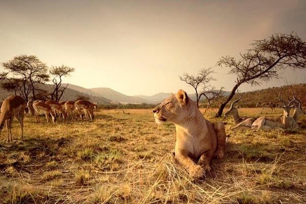 Wildlife in Pretoria